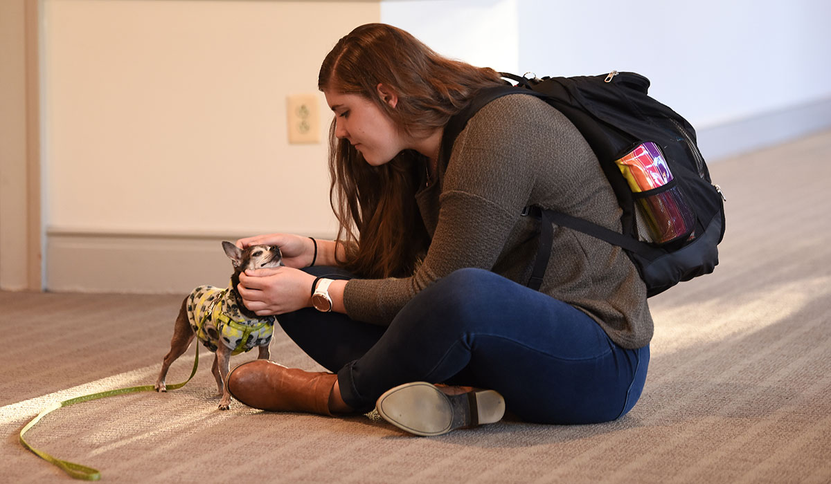 Female student wearing a brown sweater petting a very small dog wearing a yellow sweater.